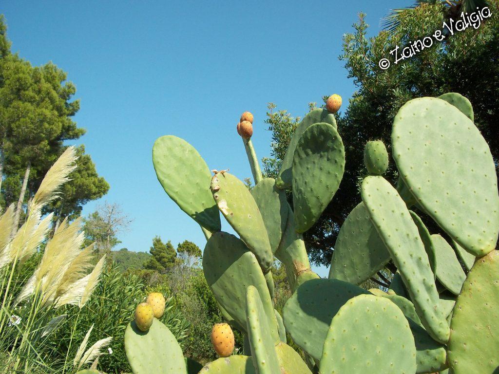 elba vegetazione