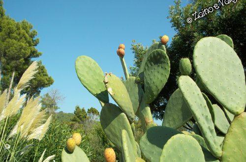 cactus isola elba