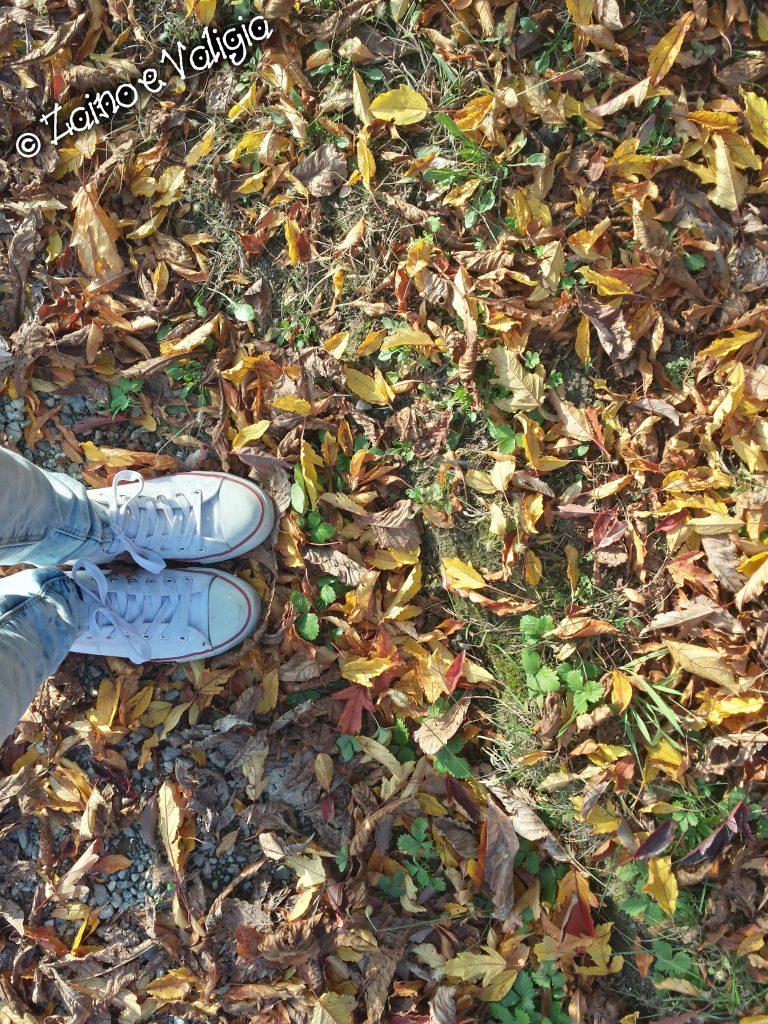 foglie scarpe autunno