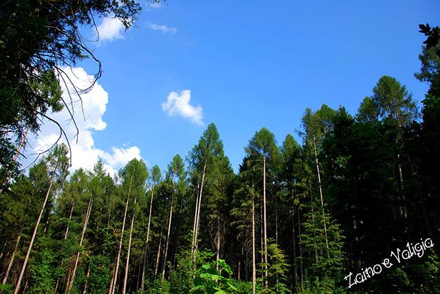 bosco natura ecologia