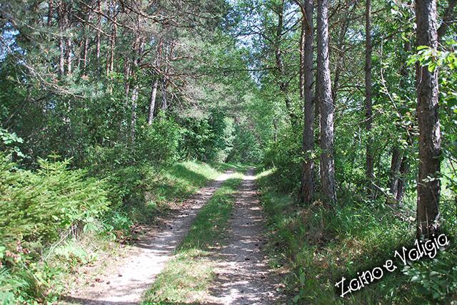 sentiero coredo santuario