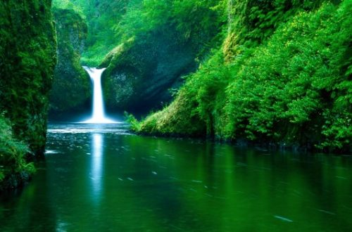 foresta cascata