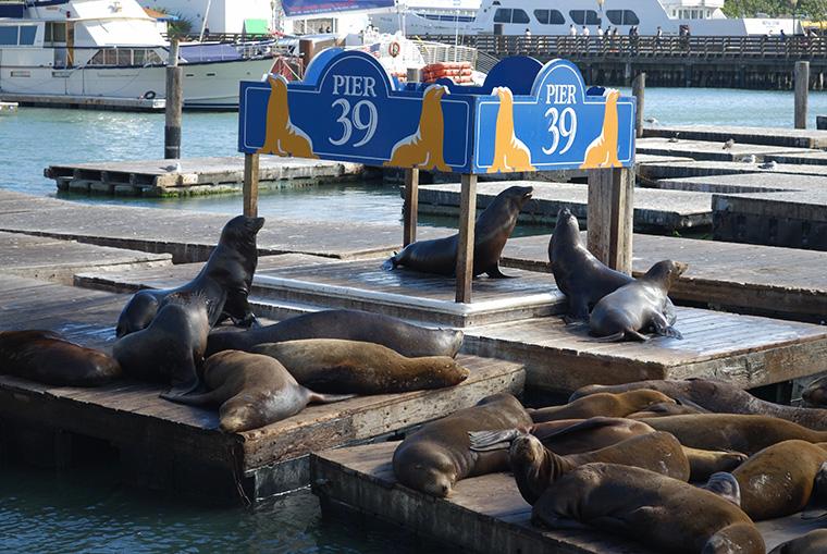 pier 39 leoni marini