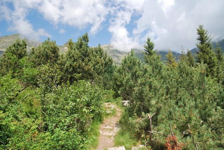 sentiero lago delle bose